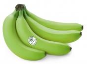 Банан зеленый