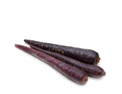Морковь фиолетовая