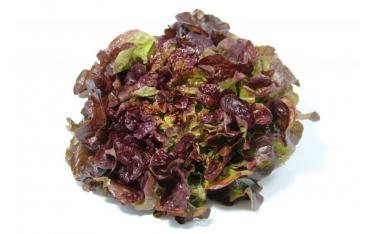 Салат Дубовый лист красный