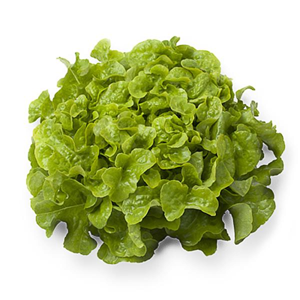 Салат Дубовый лист зеленый