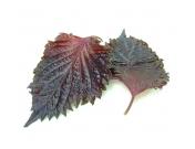 Листья шисо красные 15 шт.