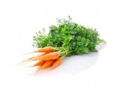 Морковь молодая с ботвой