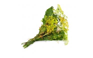 Зелень для засола