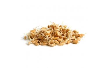 Ростки пшеницы 50г