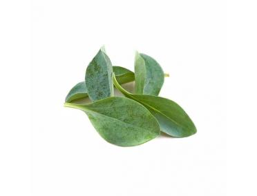 Устричные листья