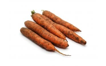 Морковь длинная