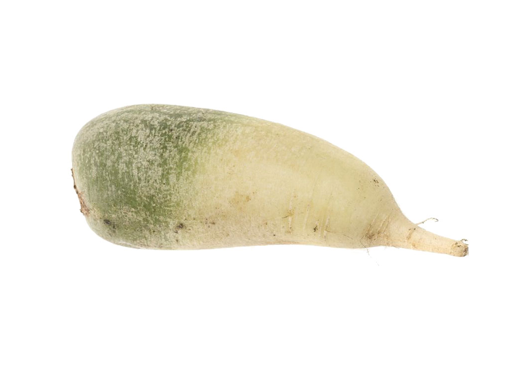 sliced green radish - HD1024×768