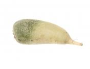 Редис зелёный