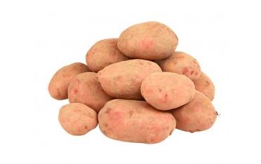 Картофель красный от 100кг