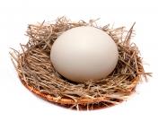 Страусиное яйцо