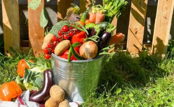 Разгрузочная неделя: налегаем на самые легкие летние овощи и фрукты - FreshMart