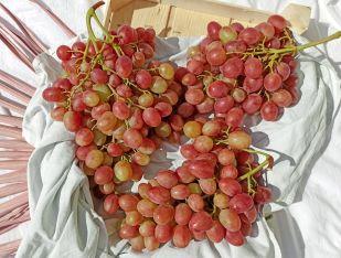 Виноград рожевий Україна - FreshMart