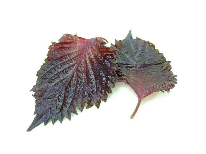 Листья шисо красные 15 шт.: фото 2 - FreshMart