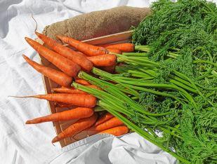 Морковь молодая с ботвой - FreshMart