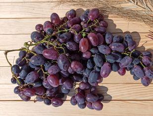 Виноград чорний кишмиш - FreshMart