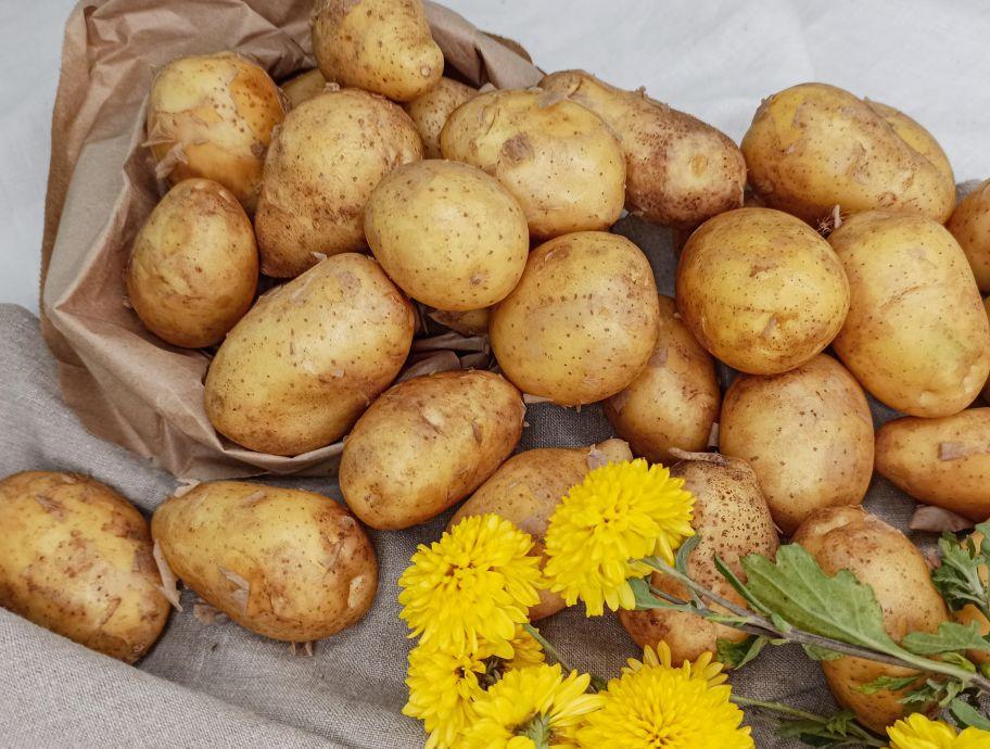 Картофель белый мытый - FreshMart