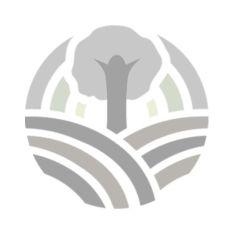 Спаржева квасоля фіолетова органічна - FreshMart