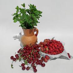 Набір для ягідного компоту з м'ятою - FreshMart