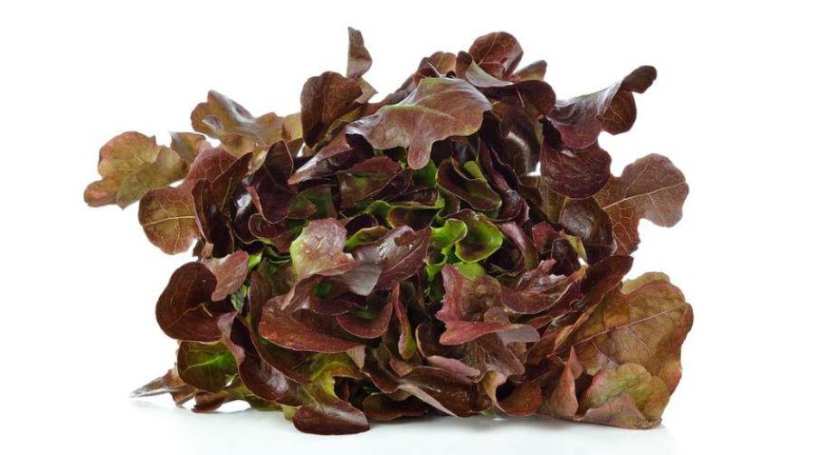 Салат Дубовый лист красный: фото 2 - FreshMart