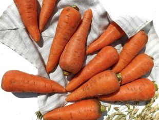 Морковь каротель - FreshMart